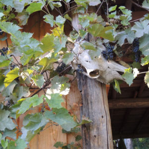Ranch for sale - vines