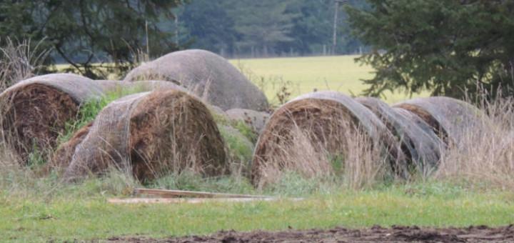 rotten-hay-720x340