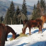 Miracle Horses And How They Stole My Heart