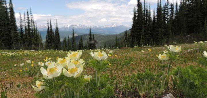 7 Spectacular North Okanagan Hikes