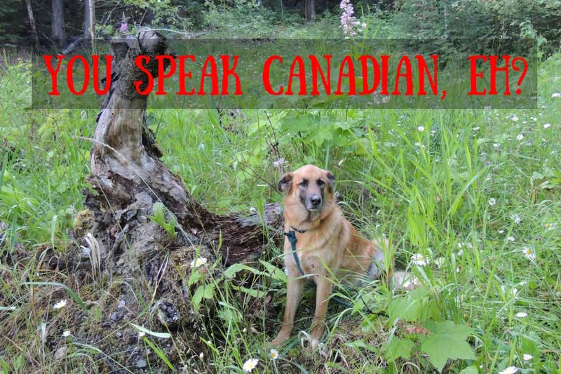 Canadian Slang - dog