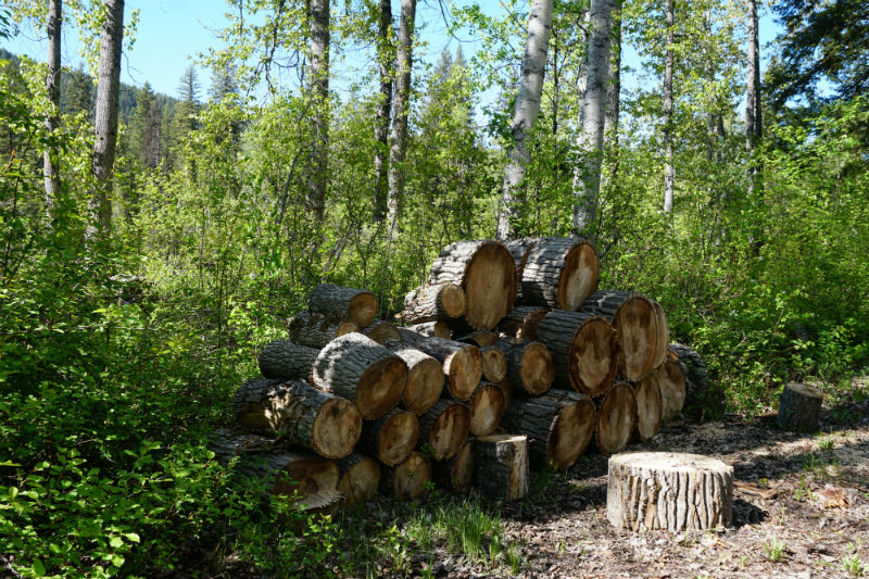 Free fire wood at recreational campsites