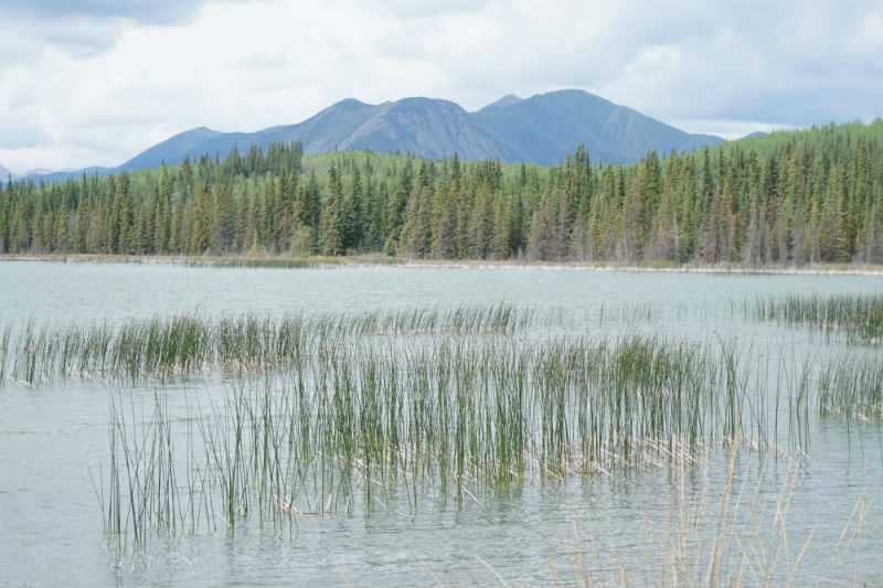 Coffee Lake on the, Campbell Country, Yukon