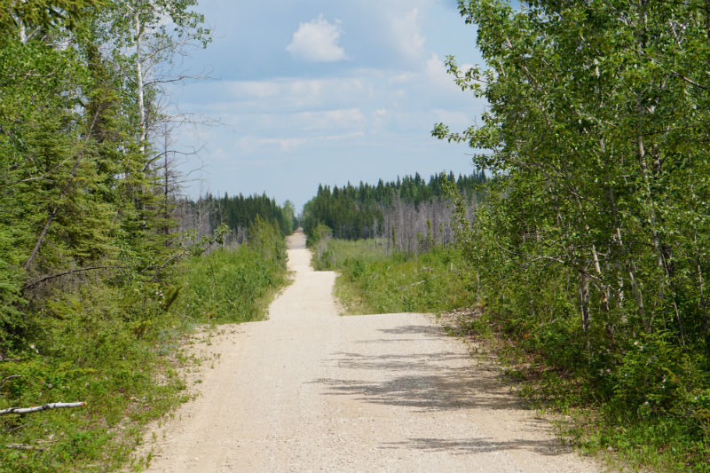 Wood Buffalo National Park NWT