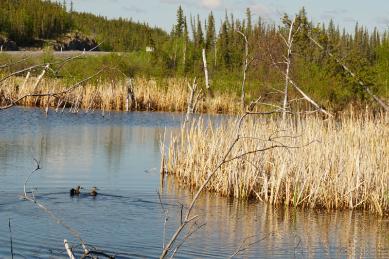 One of the dozens of lakes along the Ingraham Trail NWT