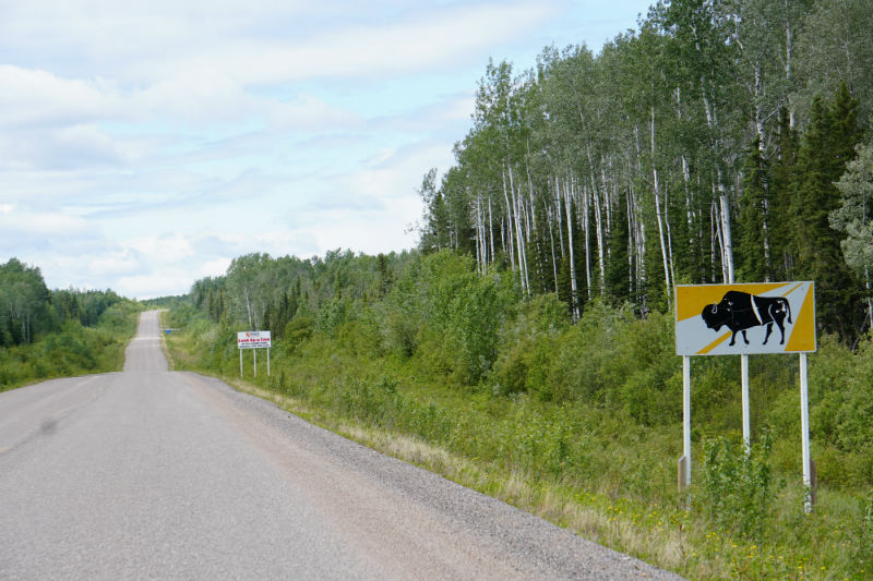 Bison sign Liard Highway