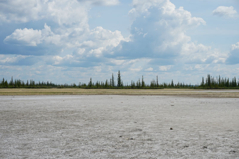 Salt Plains, Wood Buffalo National Park, NWT