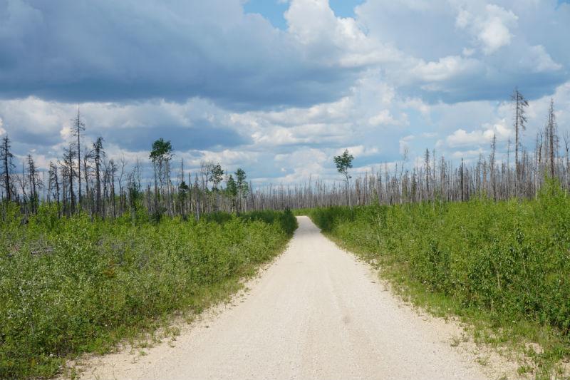 Road to Salt plains at Wood Buffalo National Park