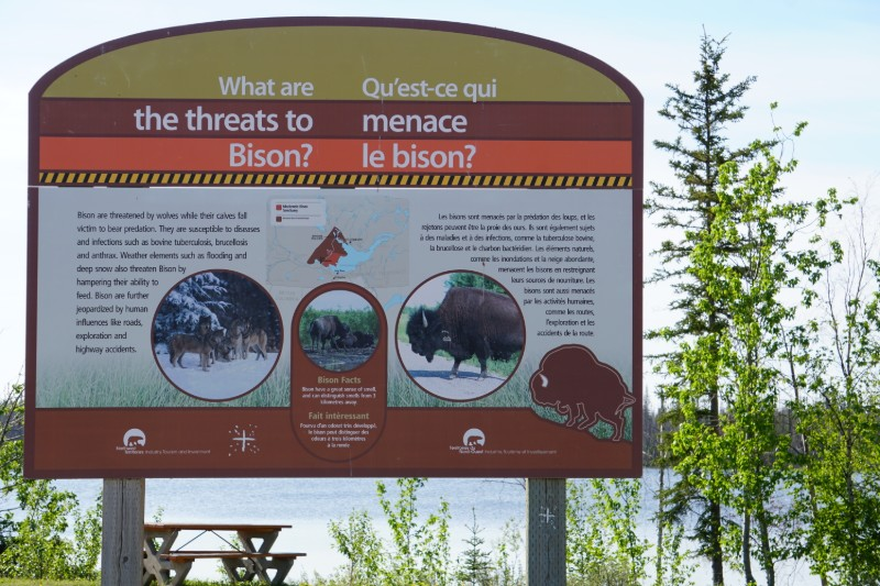 The threats to bison Frontier Trail NWT