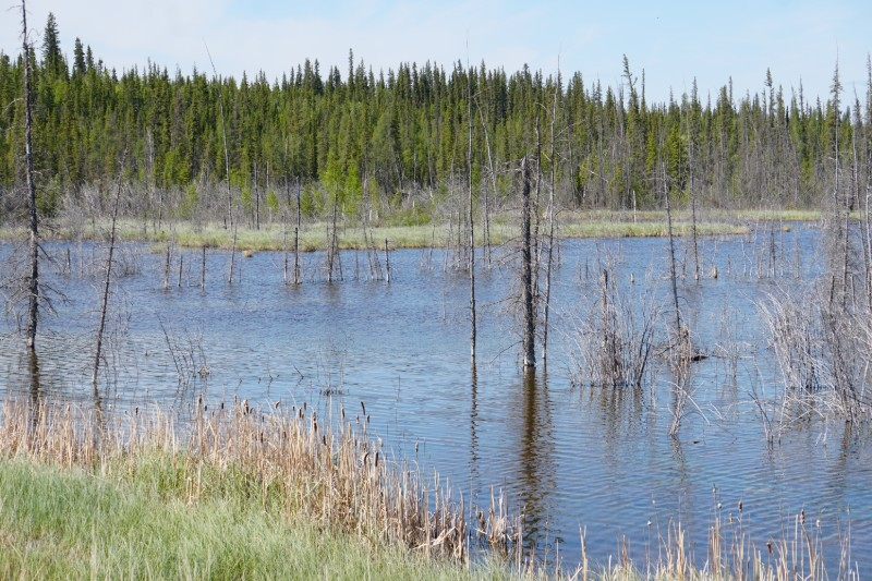 Frontier Trail NWT landscape
