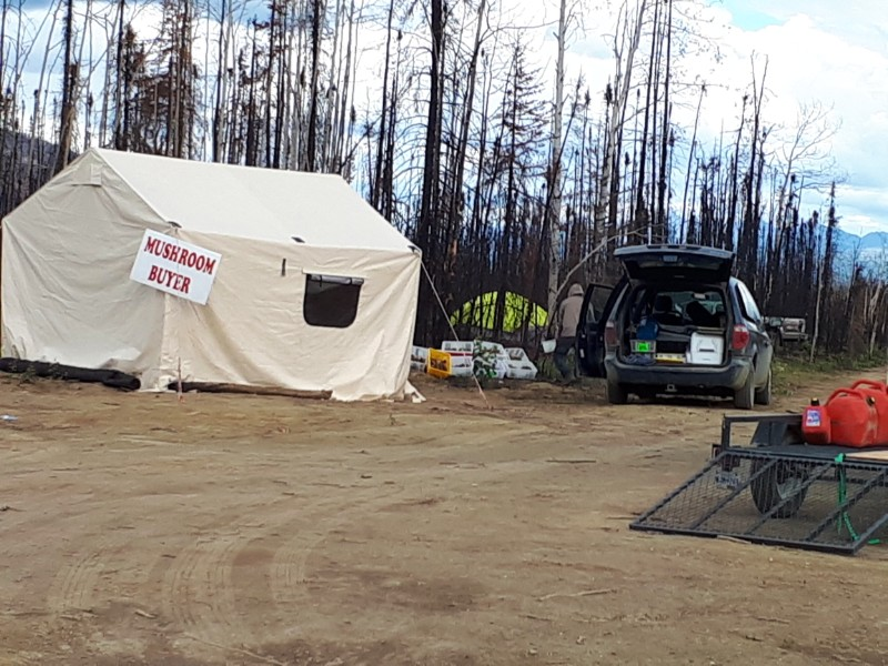 Morel Mushroom hunt - buying camps