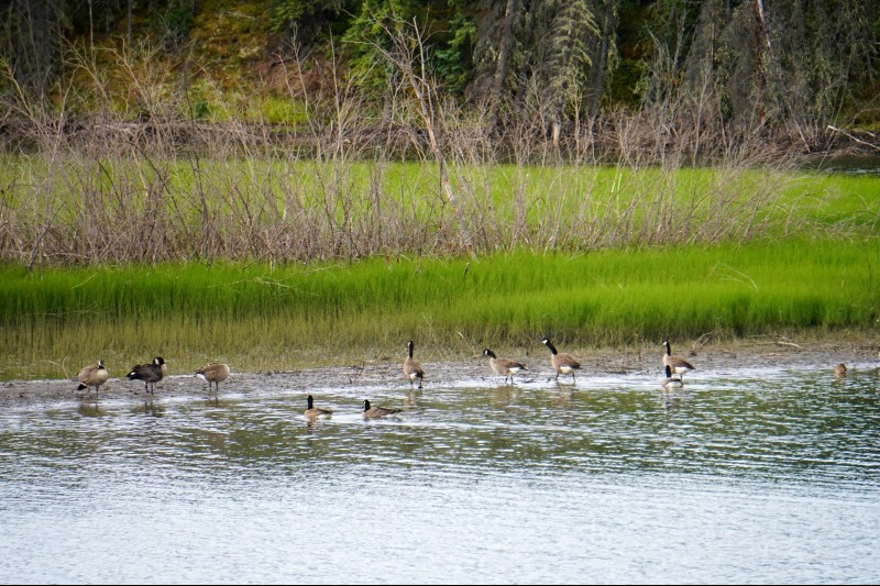 Paradise for waterfowls along the Silver Trails